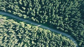 Aerial top down view of a fir tree forest and empty European car road Stock Photography