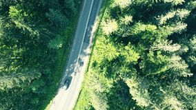 Aerial top down view of a fir tree forest and European rural car road Royalty Free Stock Photos
