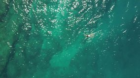 Aerial top down view of a girl in a white swimsuit swimming in the sea royalty free stock photography