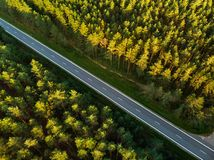 Free Aerial Top Down View Of Autumn Forest With Two-lane Road Among Pine Trees. Stock Photos - 130202413