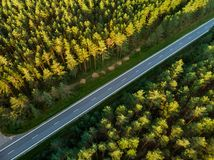 Free Aerial Top Down View Of Autumn Forest With Two-lane Road Among Pine Trees Royalty Free Stock Photography - 138405427