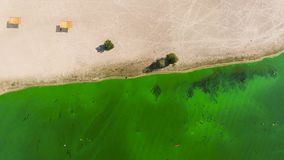 Aerial top down of water heavily polluted with green algae near sandy shore. Environmental problems, ecology and nature stock footage