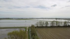Aerial top shot rising above the rice fields in the countryside stock video footage
