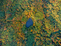 Aerial top view. Autumn landscape. Wild forest lake. stock photos