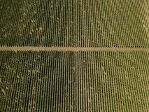 Aerial top view from drone to vineyard. With grape at summer time stock photography