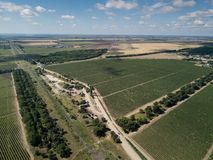 Aerial top view from drone to vineyard. With grape. Shot in Ukraine royalty free stock photo