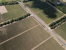 Aerial top view from drone to vineyard. With grape at summer time wine green field agriculture beautiful farm farming land nature plant rural background stock photography