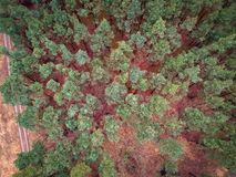 Aerial top view of the forest in spring Royalty Free Stock Photos