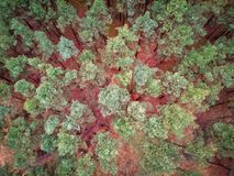 Aerial top view of the forest in spring Stock Photography