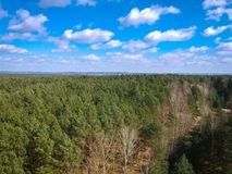 Aerial view of the forest in spring Royalty Free Stock Images