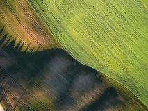 Aerial top view of a green field. Summer season. Stock Photo