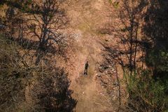Aerial top view of the man standing in forest Stock Photo