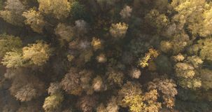 Aerial top view over field and autumn forest in the morning royalty free stock photo