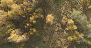 Aerial top view over field and autumn forest in the morning royalty free stock photos