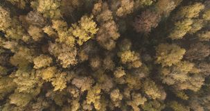 Aerial top view over field and autumn forest in the morning stock photography