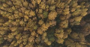 Aerial top view over field and autumn forest in the morning stock photos