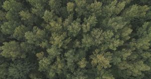 Aerial top view over summer forest on a cloudy day Royalty Free Stock Photos