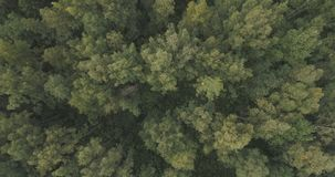 Aerial top view over summer forest on a cloudy day Stock Image