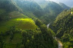 Aerial top view of paddy rice terraces, green agricultural fields in countryside or rural area of Mu Cang Chai, Yen Bai, mountain