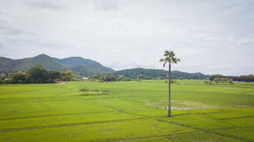Aerial top view photo from flying drone of the Buddhist temple and fields in  the countryside Royalty Free Stock Photo