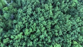Aerial top view of summer green trees in forest background. Drone photography. Coniferous and deciduous trees. Beautiful panoramic photo over the tops of pine stock footage