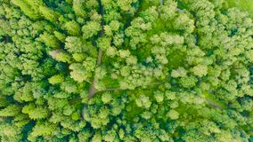 Aerial top view of summer green trees in mixed deciduous forests of Europe background