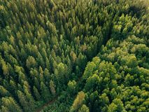 Aerial top view of summer green trees and road in forest in rural Finland. Drone photography Stock Images