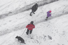 Aerial top view on a winter park with three peple, a dog and footpath covered with snow. Royalty Free Stock Image