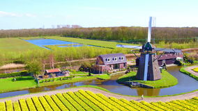 Aerial from a traditional windmill and blossoming tulip fields in the Netherlands stock footage