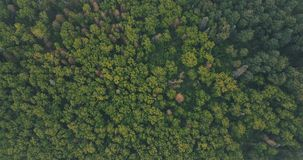 Aerial in the tree tops. A view of some cedar tree tops looking down on this bountiful forest stock images