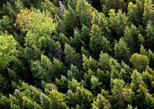 Aerial trees Royalty Free Stock Photography