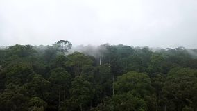 Aerial of Tropical Rainforest Dipterocarp Trees. Shot with a DJI Mavic fps29,97 4k stock video