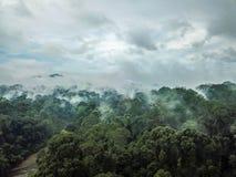Aerial of Tropical Rainforest Dipterocarp Trees. Borneo Stock Image