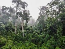 Aerial of Tropical Rainforest Dipterocarp Trees. Borneo Stock Photos