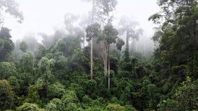 Aerial of Tropical Rainforest Dipterocarp Trees