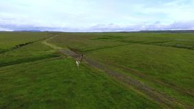 Aerial two horses run across the plain in Iceland. Andreev. Aerial two horses run across the plain in Iceland. Free horses gallop across the grass stock footage