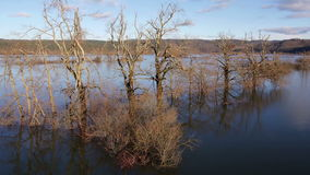 AERIAL: Underwater trees in a lake stock footage