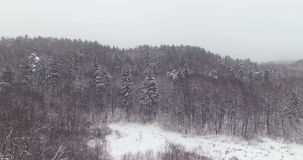 AERIAL. Unveiling shot with field and winter forest trees covered by snow in mist. 4k. Perfect for opening scene space for text stock video footage