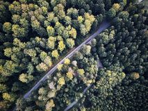 Aerial veiw of empty road in green autumn dark forest. drone shot from straight above stock photo