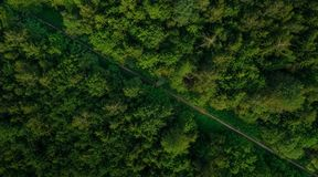 Aerial veiw of empty road in green forest. drone shot. stock photography
