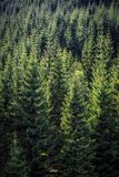 Aerial vertical landscape of a green European pine forest in a s. Unny day Royalty Free Stock Photography