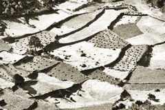 Aerial vew of Crop fields at high Himalaya mountain. Stock Photography