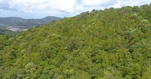 Aerial video above tropical forest in a sunny day. Aerial drone view video above green tropical forest during sunny day stock video footage