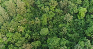 Aerial video above tropical forest in sunny day. Aerial video above green tropical rainforest in sunny day stock footage