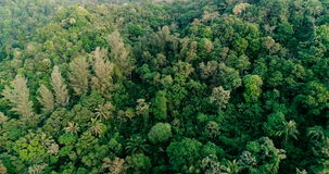 Aerial video above tropical forest in sunny day stock footage