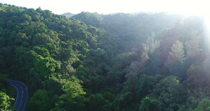 Aerial video above tropical forest in sunny day. Aerial video above green tropical rainforest in sunny day stock video
