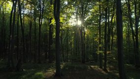 Aerial video of Autumn forest trees in the mountain. Nature green wood sunlight backgrounds.  stock footage