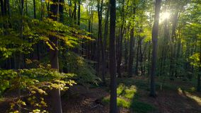Aerial video of Autumn forest trees in the mountain. Nature green wood sunlight backgrounds.  stock video footage