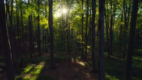 Aerial video of autumn forest trees in the mountain. Nature green wood sunlight backgrounds. Aerial video of autumn forest trees in the mountain. Nature green stock footage