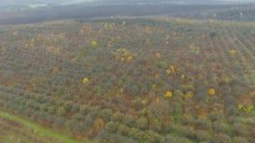 Aerial video of autumn garden fields stock video